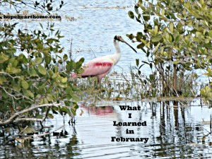 what i learned in february (2016)