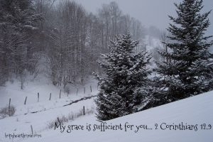 quietude: january 8 2017