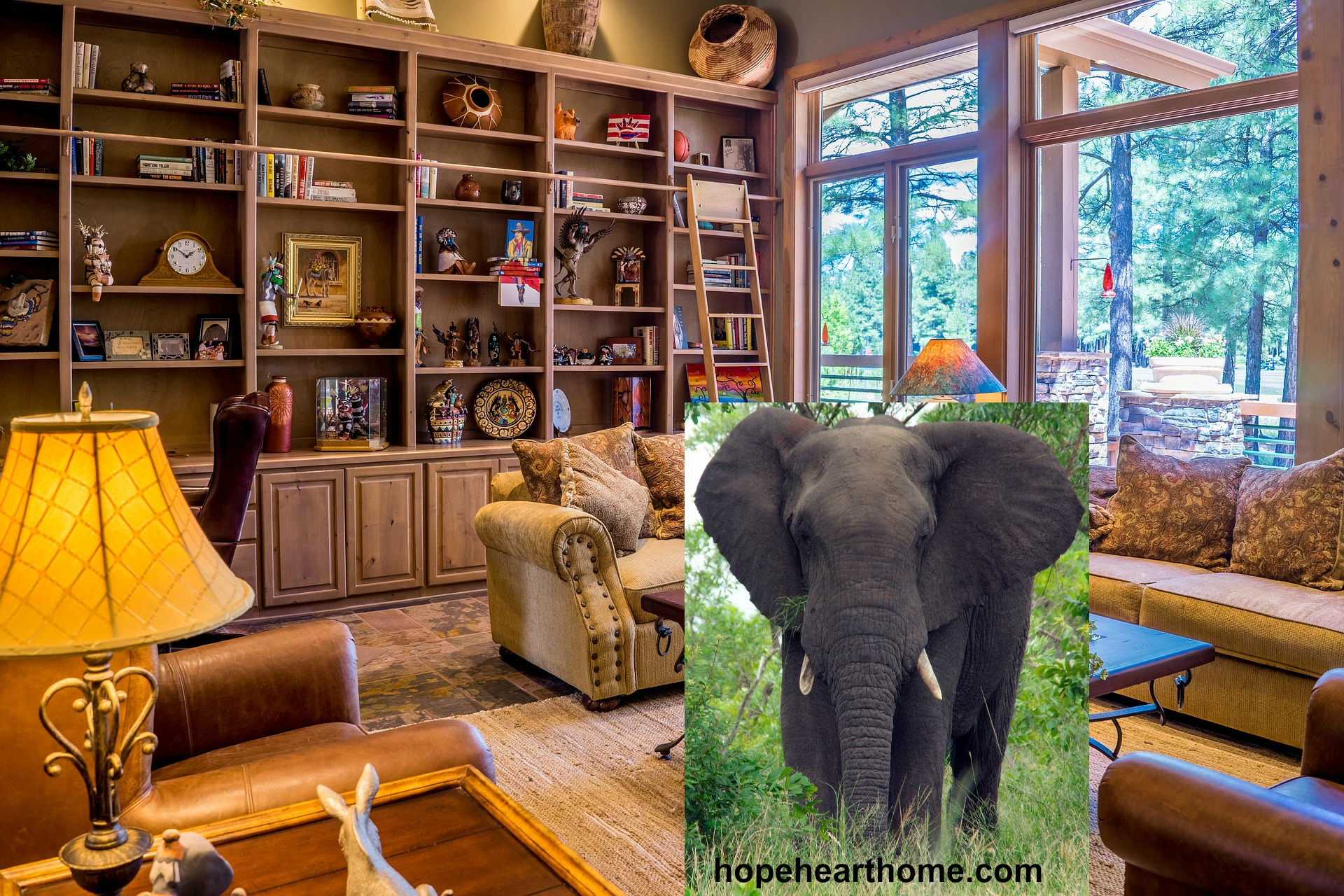 The elephant in the room encouragement hope women - The elephant in the living room full movie ...